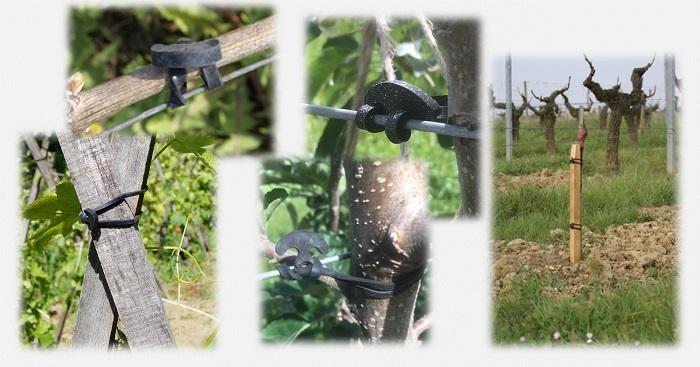 attache vigne prenas - attache pour arbre fruitier - attache pour plantes en pot