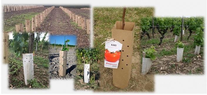 manchon papier -  protection des plants - manchon biodisac