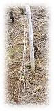 fils de palissage - fil d'amarre