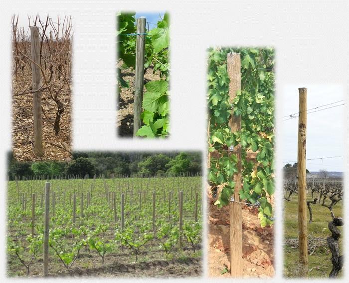Piquets pin planés et piquet pin fraisés pour la viticulture