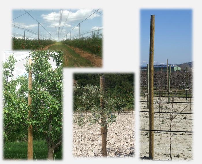 Piquets pin planés pour l'arboriculture
